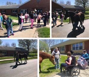 Photos of recent horse parades at Beverly Farm